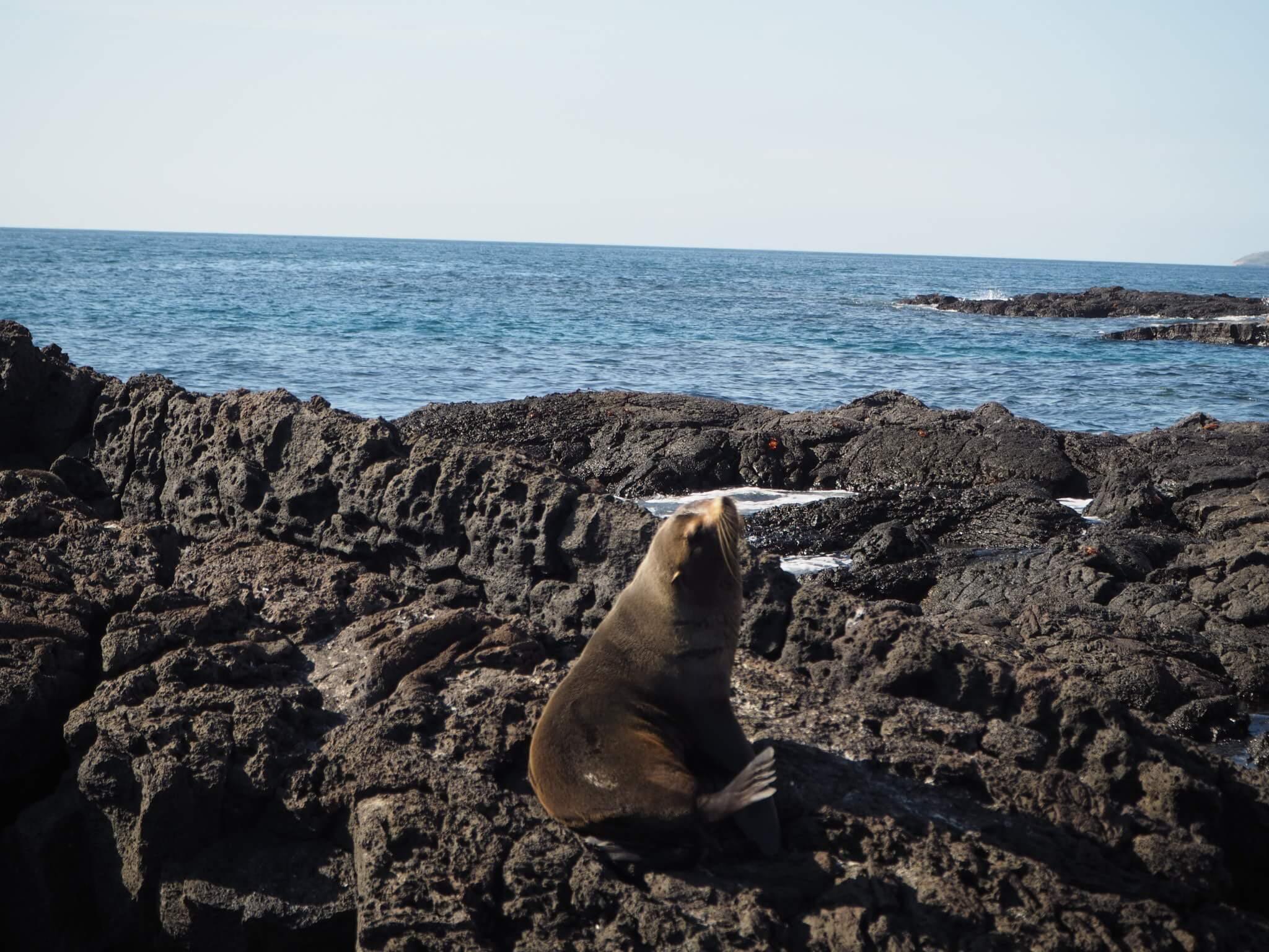 Galapagos crucero buceo lobo marino