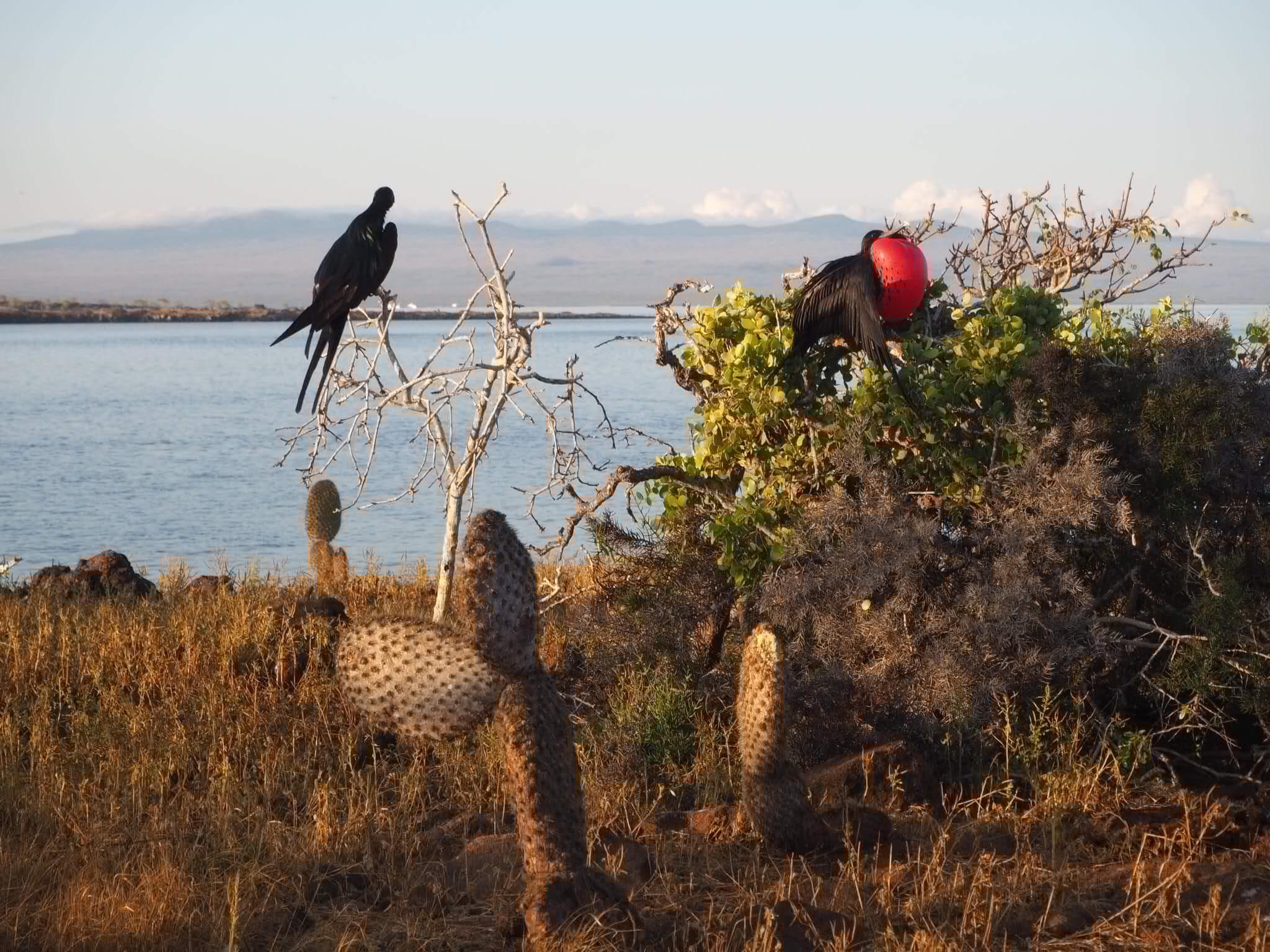 Buceo galapagos pajaro fragata