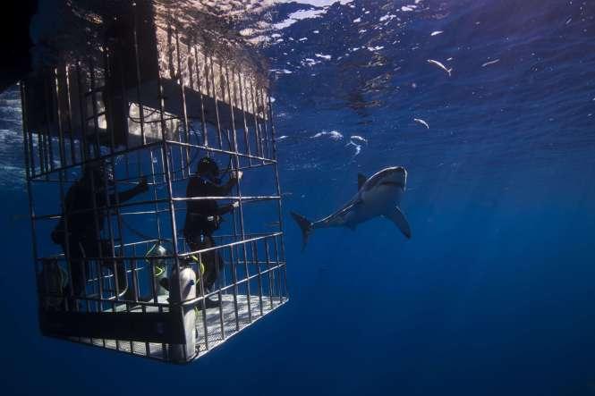 buceo tiburon blanco Ciudad del Cabo