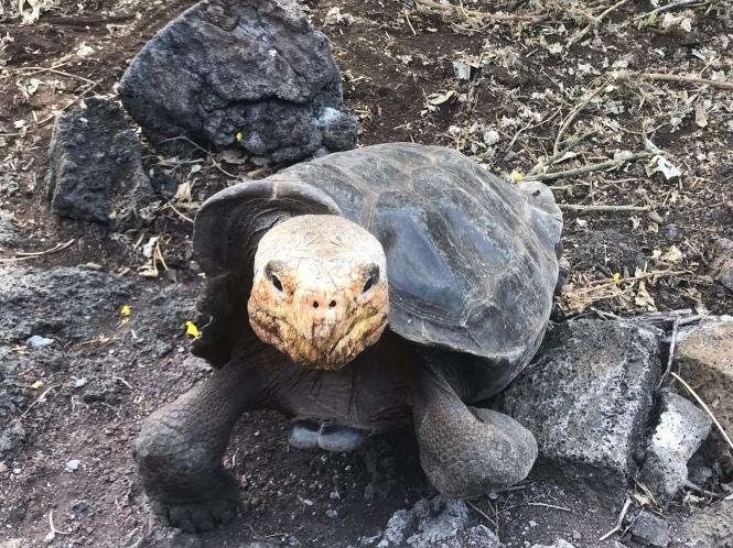 Tortuga en la Estación Charles Darwin Galápagos por tu cuenta