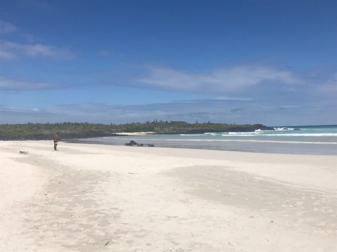 Playa tortuga Galápagos por tu cuenta